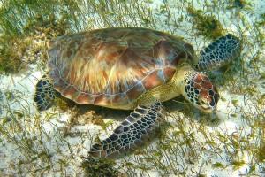 Sea Turtle Sanctuary